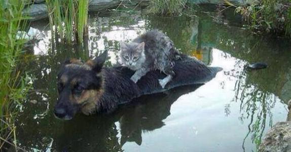 Oversvømmelsene holdt på å ta livet av katten. Da kom hunden og reddet sin kompis!