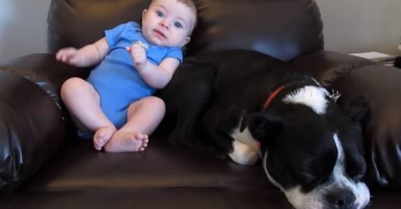 Babyen har bæsjet i buksa. Når hunden finner det ut? Jeg ler så tårene triller!
