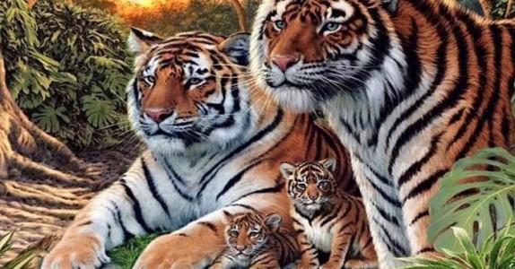 Først ser du bare 4 tigere. Men ta en nærmere titt. Hvor mange finnes det egentlig?
