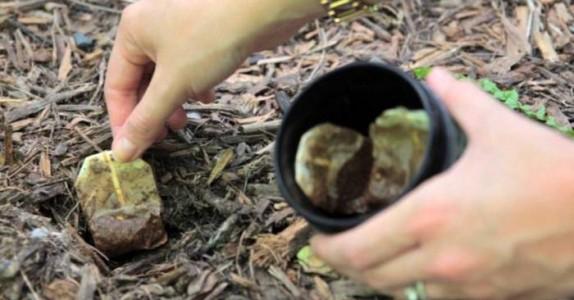 Hun sparer på gamle teposer for å grave de ned i jorden, og avslører et knep som jeg bare må teste!