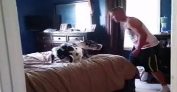 Han sier det er «på tide å bade». Hundens reaksjon? Så morsomt!