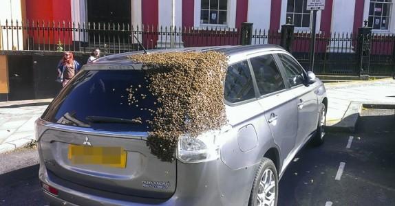 En bileier ble fulgt av 20 000 bier i TO DØGN! Men du gjetter aldri hvorfor!