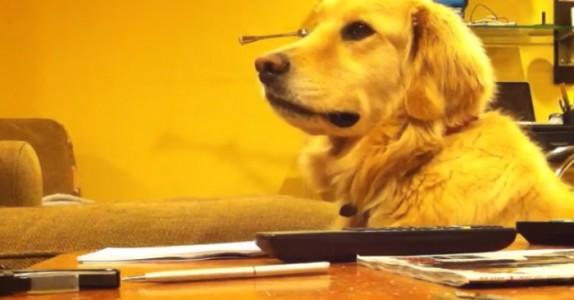 Han spiller gitar for hunden, men FØLG MED når musikken stopper…