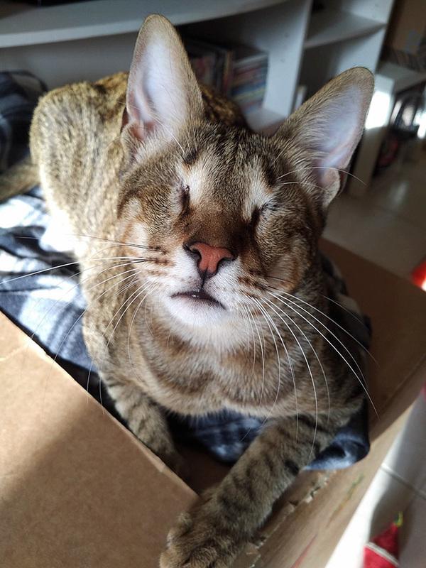 blind katt3