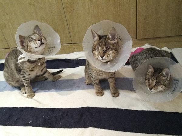 blind katt4