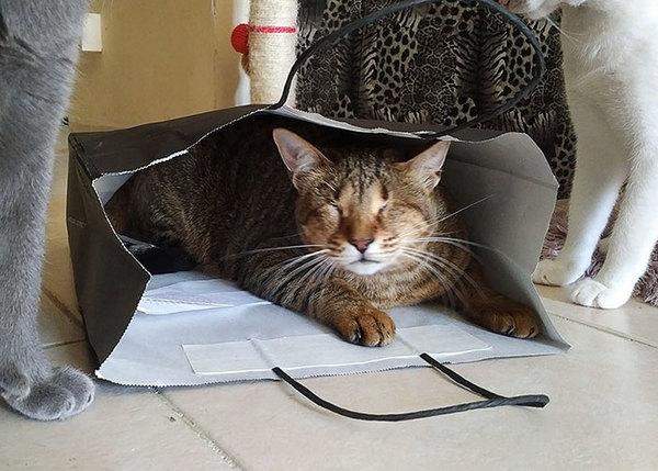 blind katt7