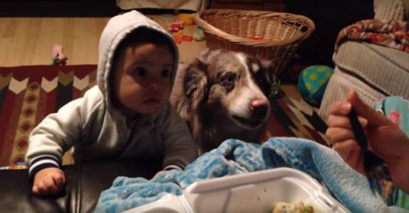 De prøver å få babyen til å si sine første ord. Hvordan hunden reagerer? Så morsomt!