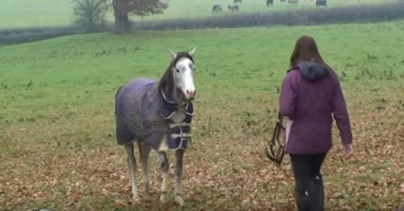 Kvinnen har vært borte fra den elskede hesten sin – og her gjenforenes de endelig!