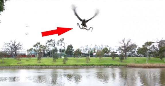 Han filmer en hauk fange en slange. Men hva som skjer så er UTROLIG!
