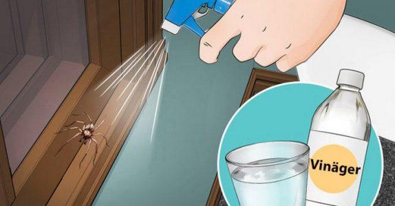 Om du gjør DETTE, kommer du aldri til å se edderkopper på kjøkkenet, badet eller soverommet igjen!
