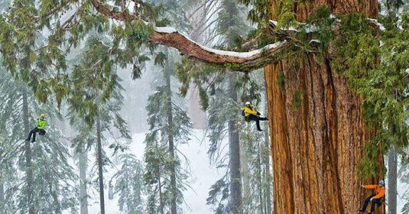 Dette treet har forbløffet folk i 3200 år. Men FØLG MED når kameraet zoomer ut!