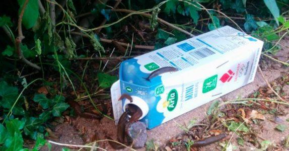 Med denne hjemmelagde fellen, utrydder du sneglene fra hagen din på et blunk!