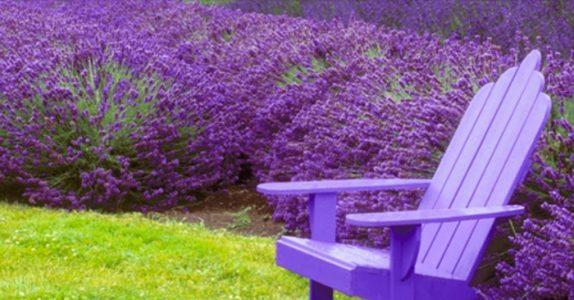 Hold myggen unna denne sommeren. Ved å plante noen av DISSE 7 vekstene i hagen din!