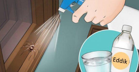 Med disse triksene ser du aldri edderkopper på kjøkkenet, badet eller soverommet igjen!