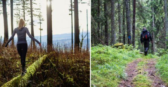 Ny forskning viser: Naturen virker bedre mot utbrenthet enn medisiner!