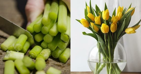 Slik får du tulipanene til å leve lengre. Dette trikset burde alle kunne!