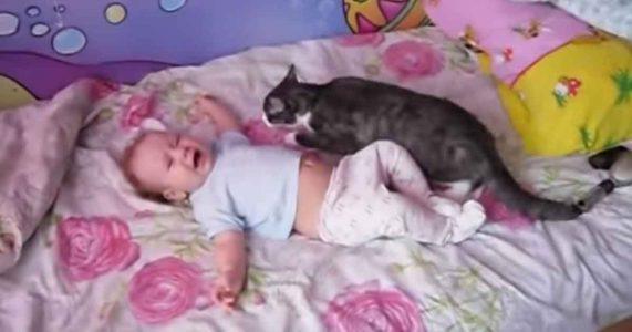 Babyen gråter i sengen. Men vent til du ser hva KATTEN finner på!