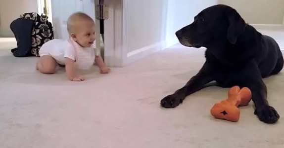 Den lille jenta krabber for første gang. Men se hva labradoren gjør.. Dette er ekte kjærlighet!