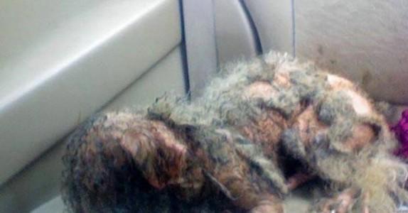 Han gjorde narr av den torturerte hunden. Men det var noe la han ikke merke til!