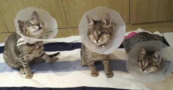 Ingen ville ha den blinde kattefamilien. Da adopterte Catherine alle tre!