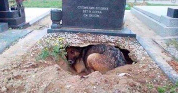 Hunden nekter å forlate graven. Men når kvinnen finner ut HVORFOR reagerer hun med en gang!
