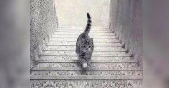 Dette bildet deler hele internett i  to. Hva ser du – at katten går opp eller ned trappen?